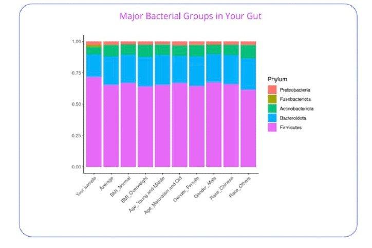 Major Bacterial Groups in Your Gut