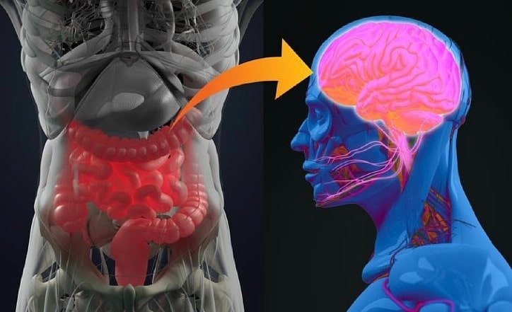 What is the connection between gut microbiome and autism
